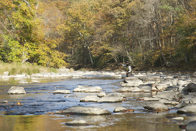 Trout fishing at black moshannon creek central pa for Best trout fishing in pa